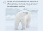 Polar bears | Recurso educativo 58977