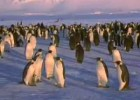 Life of Penguins | Recurso educativo 496167