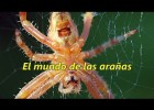 El mundo de las arañas - The extraordinary world of spiders | Recurso educativo 772551